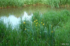 2010 06 12 Herrensee